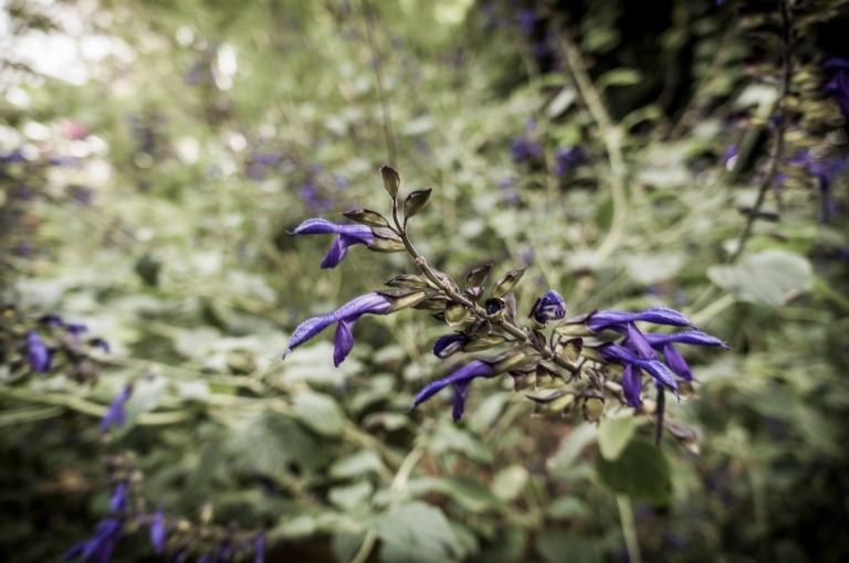 SF Botanical Garden_15